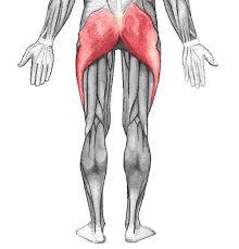 お尻痩せ1週間の原因は大臀筋